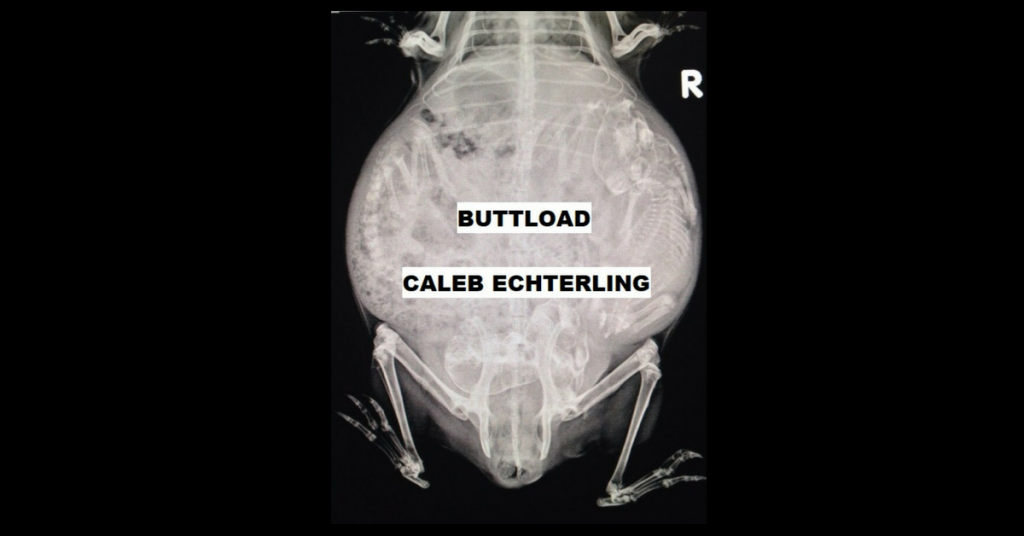 BUTTLOAD by Caleb Echterling