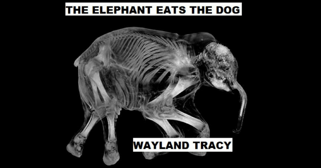 THE ELEPHANT EATS THE DOG by Wayland Tracy