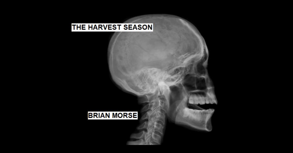 THE HARVEST SEASON by Brian Morse