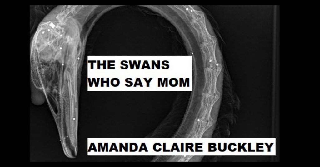 THE SWANS WHO SAY MOM by Amanda Claire Buckley