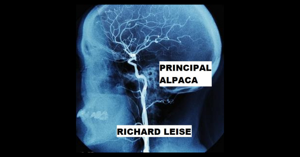 PRINCIPAL ALPACA by Richard Leise