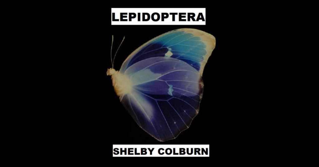 LEPIDOPTERA by Shelby Colburn