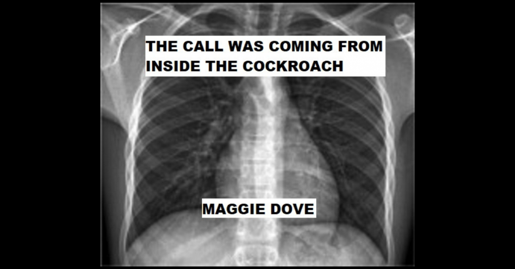 THE CALL WAS COMING FROM INSIDE THE COCKROACH by Maggie Dove