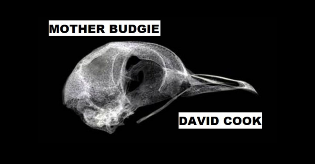 MOTHER BUDGIE by David Cook