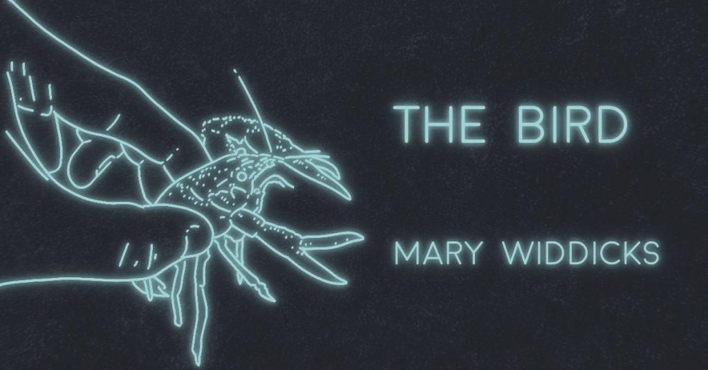 THE BIRD by Mary Widdicks