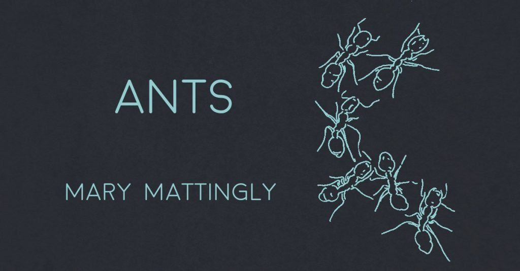 ANTS by Mary Mattingly