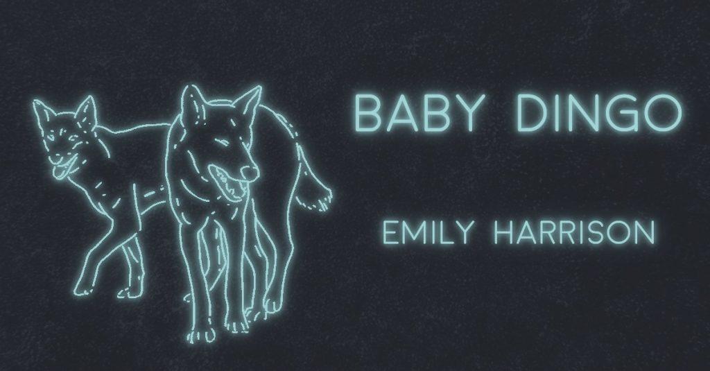BABY DINGO by Emily Harrison